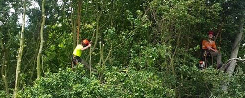 Tree Conservation / Tree Preservation Order Specialists